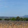 Domaine Viticole Appellations Côte de Provence / Vins de pays du Var - VAR